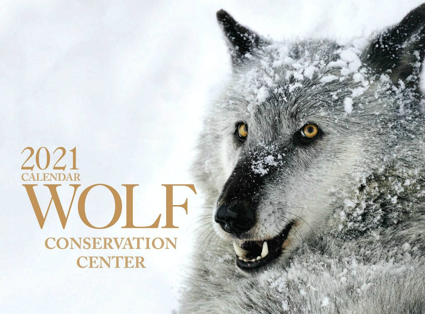 2021 Wolf Calendars Available for Purchase
