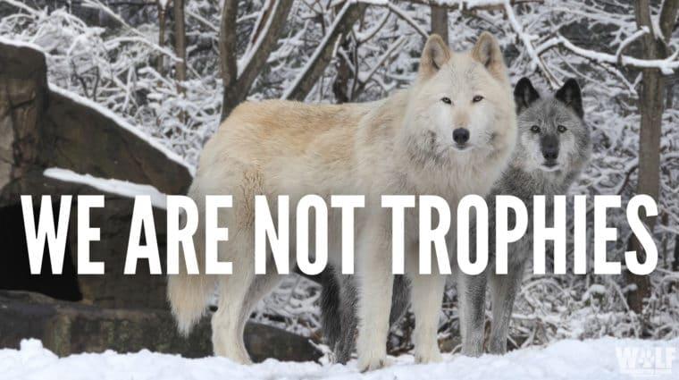 Not Trophies
