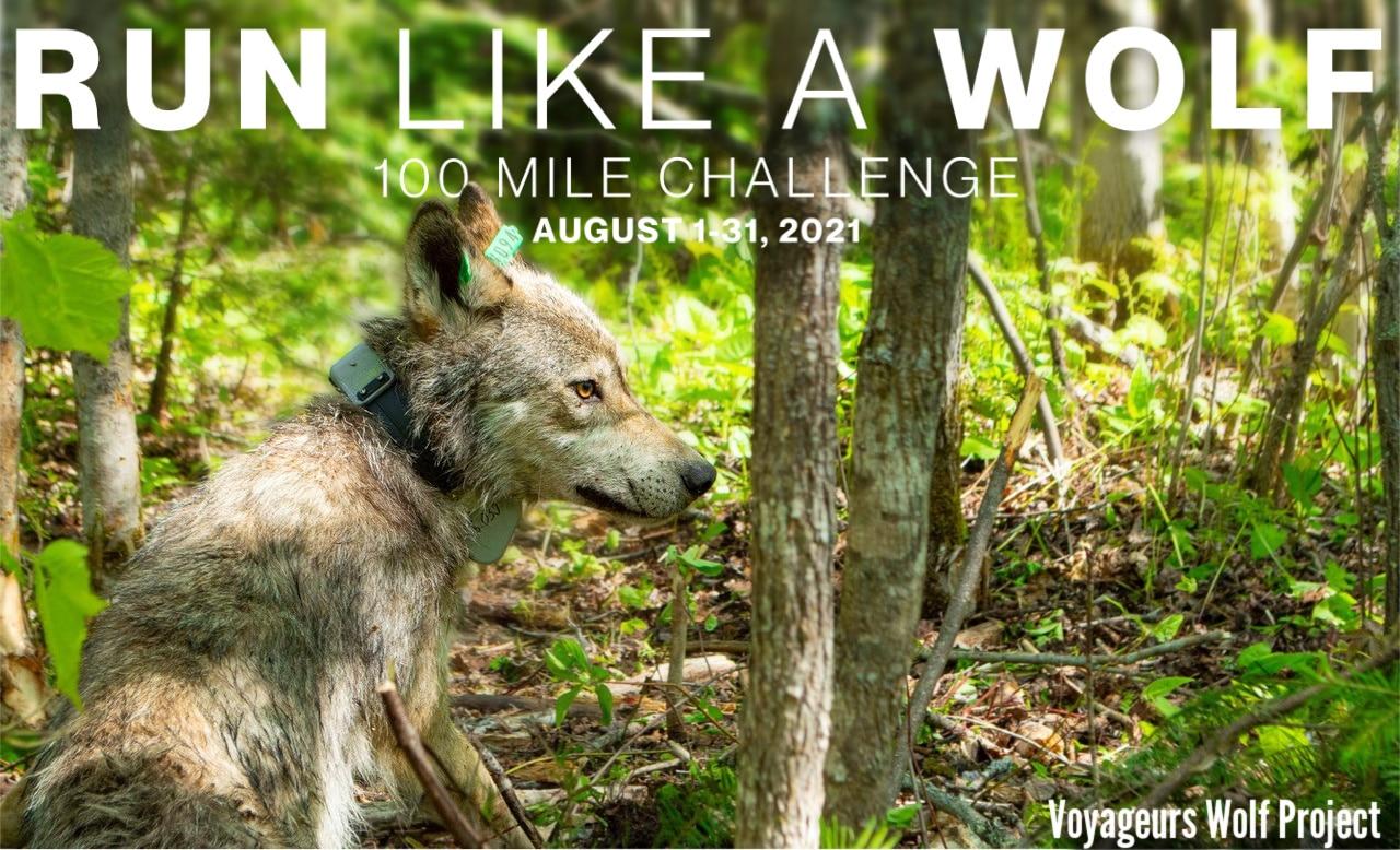 Wild Wolf V094
